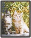 wertiges Mousepad ca. 24x20cm - Katze - 22602