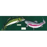 PVC Aufkleber Applikation Fisch - Angler - Angeln - FISCHE - 307139 - Gr. ca.  20 x 5,5 cm