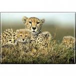 TIERMAGNET - Raubkatze Gepard - Gr. ca. 8 x 5,5 cm - 37007 - Küchenmagnet