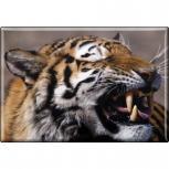 TIERMAGNE - Wildkatze Tiger - Gr. ca. 8 x 5,5 cm - 37019 - Küchenmagnet