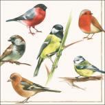 Servietten 20er Set - TISSUE mit Motiv -6 Vögel Zweig- 33725 Gr. ca. 33x33cm