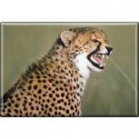TIERMAGNET - Raubkatze Gepard - Gr. ca. 8 x 5,5 cm - 37006 - Küchenmagnet