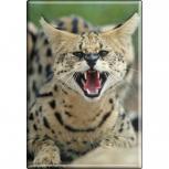 TIERMAGNET - Wildkatze Luchs - Gr. ca. 8 x 5,5 cm - 37016 - Küchenmagnet