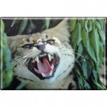 TIERMAGNET - Wildkatze Luchs - Gr. ca. 8 x 5,5 cm  - 37017 - Küchenmagnet