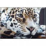 Kühlschrankmagnet - Raubkatze Leoparden - Gr. ca. 8 x 5,5 cm - 37036 - Magnet Küchenmagnet