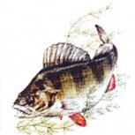 PVC Aufkleber Applikation - Fisch - Fische - Angler - ANGELN - 307137 - Gr. ca. 8 x 9 cm