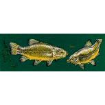 PVC Aufkleber Applikation Fisch - Angler - Angeln - FISCHE - 307141 - Gr. ca. 20 x 5,5 cm