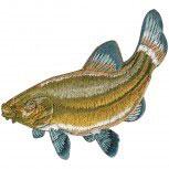 Aufnäher - Fisch Hecht Aal Hering - 04564 - Gr. ca. 8-11cm