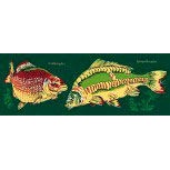 PVC Aufkleber Applikation Fisch - Angler - Angeln - FISCHE - 307142 - Gr. ca. 20 x 5,5 cm